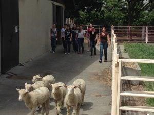 students_sheep_ans139